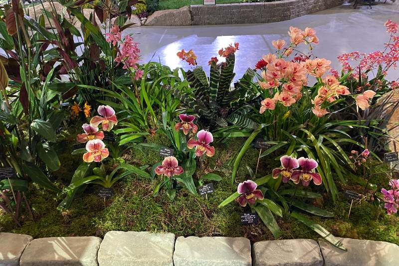 A bed of colorful Paphiopedilum orchids in the NWOS display at the 2019 Northwest Flower and Garden Show